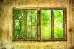 Old window in grenn nature Stock Images