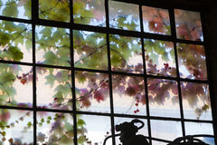 Old window in harmonic colors with ivy growing at the outside Royalty Free Stock Photos
