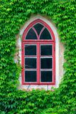 Old window and ivy Stock Photo