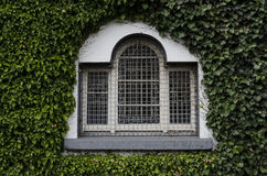 Old window on ivy covered wall Stock Photography