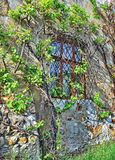 Old window with ivy Stock Images