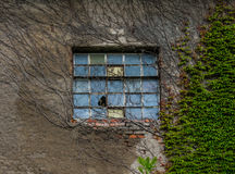 The old window and ivy of a farmhouse Stock Photos