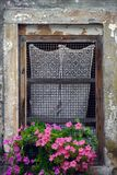 Old window with lace curtain and flower box. Old lattice window with lace curtain and flower box with pink petunia flowers in summer in Italy Stock Photos