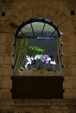 Old window with orchids Stock Photos
