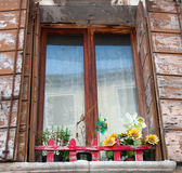 Old window with shutters and flowers Royalty Free Stock Photography