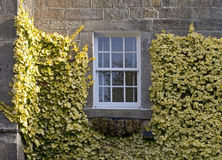 Old Window surround with Foliage Royalty Free Stock Image