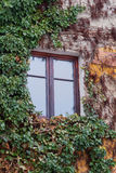 Old window surrounded by creeping ivy plants Stock Photos