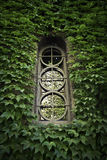 Old window surrounded by leaves Stock Images