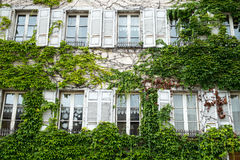 Old Window with tree Royalty Free Stock Photo