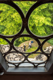 Through an Old Window. View through the old glass window Royalty Free Stock Photos