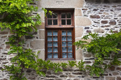 Old Window with vines Stock Images