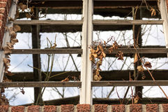 Old window with vines growing out of it Stock Photos