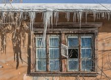 An old window with wooden brown frames and a group of sharp bright white transparent icicles and snow and ice and orange maple stock image