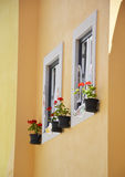 Old windows with flower pots Royalty Free Stock Photo