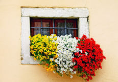 Charming floral compositin with vivid flowers. window decoration Stock Photos