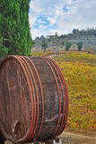 Old wine barrel in Tuscany autumn landscape. Vineyard landscape in Chianti royalty free stock images