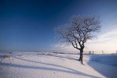 Old winter tree landscape Stock Photo