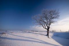 Old winter tree landscape Stock Photo