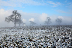 Old winter trees on a fog snow hill Royalty Free Stock Image