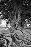 Old wise tree Royalty Free Stock Photos
