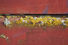 Old wodden board with lichen Royalty Free Stock Photos