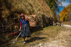 Old woman carrying hay for animals Stock Photography