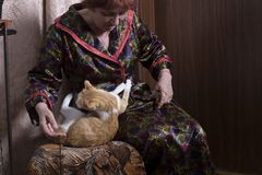 Old woman with a cat in her home stock photos