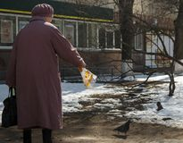Old woman in a coat feeding pigeons royalty free stock photo