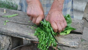 Old woman cutting beet stock video footage