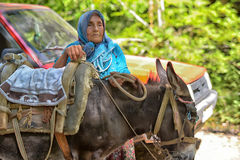 Old woman with a donkey royalty free stock images