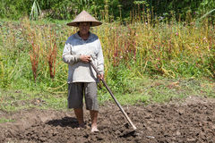 Old woman farmer holding spade at field. Bali, Indonesia. Stock Photography