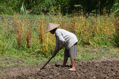 Old woman farmer holding spade at field. Bali, Indonesia. Royalty Free Stock Photos