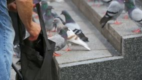 Old Woman is Feeding Pigeons on the Street. Crowd of pigeons at the feet of a man on the sidewalk. Flock of pigeons eating bread outdoors in the city street stock video footage