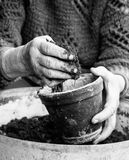 Old woman filling a pot with fresh soil. Symbol of spring Royalty Free Stock Image