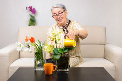 Old woman flowers care Royalty Free Stock Photography