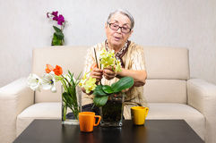 Old woman flowers care Royalty Free Stock Images