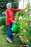 Old Woman at the Garden with Watering Can Stock Photo