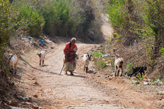 Old woman with goats Stock Image
