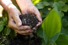 Old woman with handful of soil in garden Royalty Free Stock Photo