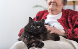 Old woman with her cat Royalty Free Stock Image
