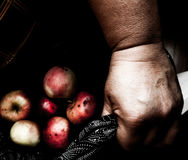 Old woman holding rotten apples in lap. Royalty Free Stock Photos