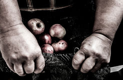 Old woman holding rotten apples in lap. Royalty Free Stock Images