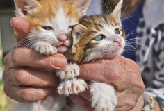 Old woman holds her kittens Royalty Free Stock Photography