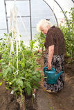 The old woman in a hothouse Royalty Free Stock Images