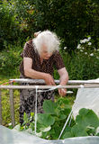 The old woman in a hothouse at bushes Royalty Free Stock Image