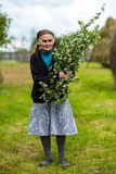 Old woman picking hawthorn flowers Royalty Free Stock Photos