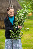 Old woman picking hawthorn flowers Stock Photos