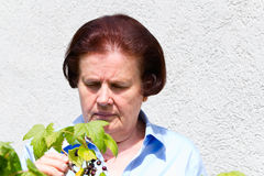 Old woman with plant Stock Images