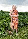 Old woman with a shovel Stock Photo