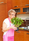Old woman smelling her mint plant at home in the kitchen Royalty Free Stock Image
